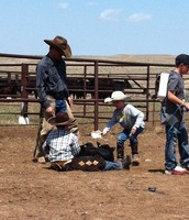 This is me holding the back feet fo a calf while its being worked.