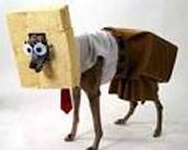 That's a dog that looks like Spongebob