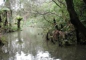 swamps are huge bodies of water in the forest.