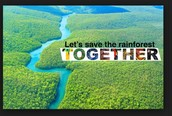 Help save the rainforest