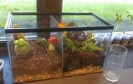5th Grade: Exploring STEM Through Building a Terrarium