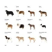 Birkaç Evcil Köpek
