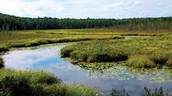 The Importance of Wetlands