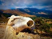 ASI: Animal Skull Investigation