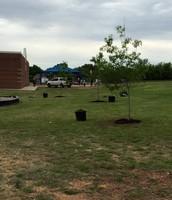 Trees around 3-4 Playground