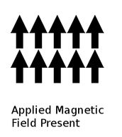 Magnetized Magnetic Domains