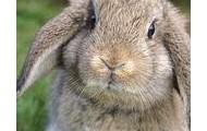 Describe the bunny