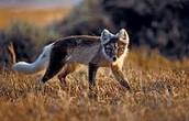 wildlifetrips.org.uk