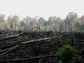 What does deforestation do?