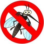 Summer Mosquito Control
