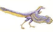 Entire body of the Archaeopteryx
