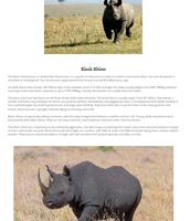 Black Rhinocerous Page