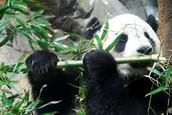 killagrams of bamboo
