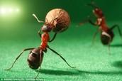ant newton