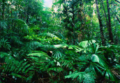 Climate of the Tropical Rainforest