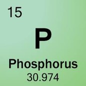 Phosphorous on the Periodic Table