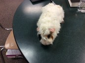 My class pet