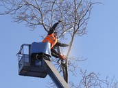 Tree Services and Removal