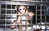 Should Animal Experimentation be allowed?