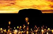 Field of Light Celebration