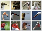 Bird Beak Adaptations