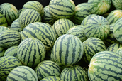 Got too many watermelons, my guy.