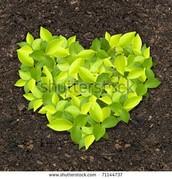Plants on soil