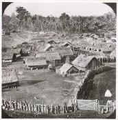 The Māori