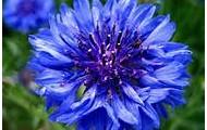 Flower power garden