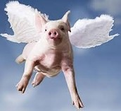 The Pig That Flew