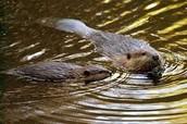 animals in wetlands