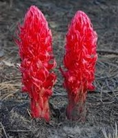 red plant in the southwest region