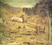 The mining goldfield