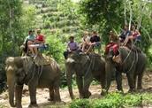 Awesome elephant ride
