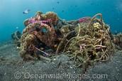 Destroyed Marine Life