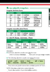 Irregular feminine forms, irregular masculine plural forms,