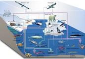 CHARACTERISTICS OF THE MARINE ECOSYSTEM