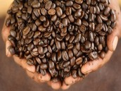 Export: Coffee Beans