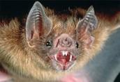 Bat/Bate