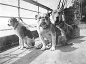 Animals on the Titanic