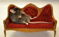 Mouse and Couch