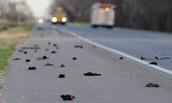 Blackbird incident