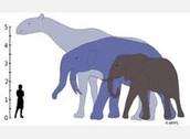 Mammals & Dinosaurs appear