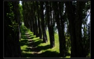"""""""the path full of peace""""(4)"""
