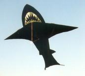 Shark bait hoo ha ha