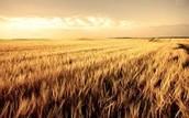 Improved Farming Methods