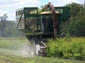 Harvesting process