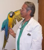 Vets and Scientists help for the birds
