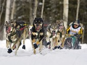 Dogs during the race