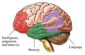 parts of the brain alzheimer's effects